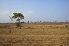 Arid karnataka landscape. Arid south indian landscape with agricultural fields of karnataka state Stock Images