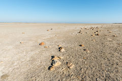 Arid lagoon landscape Royalty Free Stock Image