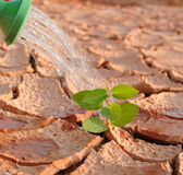 Arid land. In arid land irrigated ,Plant fighting drought Stock Photo