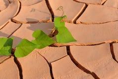 Arid land. The leaves on arid land Royalty Free Stock Photography
