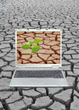 Arid land. Laptop demonstrates the plant growing on arid land Royalty Free Stock Photo