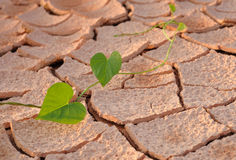 Arid land. On the leaves Royalty Free Stock Photography