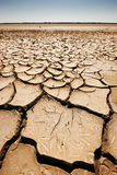 Arid land in the Camargue. Cracked arid land from the sun with bird footprints Stock Images