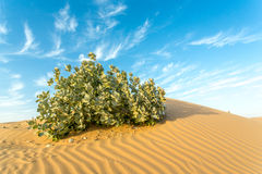 Arid Land Royalty Free Stock Image