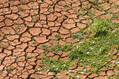 Arid land Stock Image