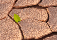 On an arid land leaf. On an arid land piece of green leaf Royalty Free Stock Photography