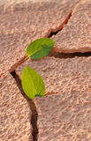 On an arid land leaf Royalty Free Stock Images