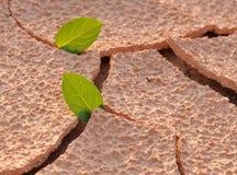 On an arid land leaf Stock Photography