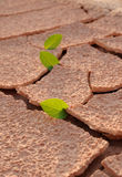 On an arid land leaf Stock Images