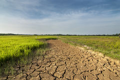 The arid land at paddy field. Stock Photography
