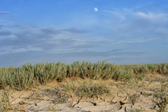 Arid landscape with cracked mud Stock Photo