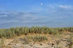 Arid landscape with cracked mud Stock Photo
