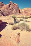 Arid landscape, Nevada, USA. Arid landscape of the Valley of Fire State Park, color toned image, Nevada, USA Stock Photos