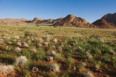 Arid landscape in stone desert Royalty Free Stock Image