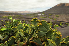 Arid landscape with volcanoes, in Timanfaya National Park, Lanzarote, Spain Stock Photography