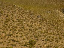 Arid landscape where you see cactus or cactus royalty free stock photos