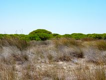 Arid meadow with tree line with intense green tops Stock Photos