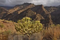 Arid mountains with succulent plants Gran Canaria stock image