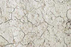 Arid mud. Gray arid mud, background and texture Royalty Free Stock Photography