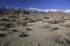 Arid Owens Valley and Sierra Nevada mountains Stock Photo