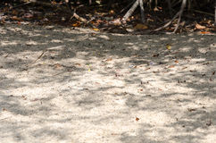 Arid sandy terrain in Aruba island. Caribbean sea Royalty Free Stock Photo