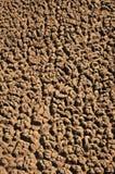Arid Soil. Shrinkage cracking in Arid Soil pattern of the nature Stock Image