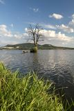 Arid tree in lake Stock Image