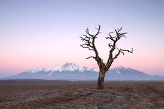 Arid tree Royalty Free Stock Image