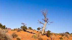 Aridità nella valle del monumento Fotografia Stock