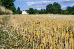 Aridity on french field. Photo of a dry field in France during summer 2015 royalty free stock images