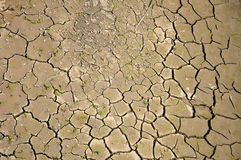Aridness. Cracked and dried ground as a background Royalty Free Stock Photography
