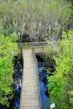 Arieal view of A boardwalk in swamp Stock Photo