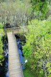 Arieal view of A bridge in swamp Stock Photo