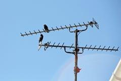 Ariel Birds Stock Images
