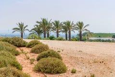 Ariel Sharon-Park, Israel lizenzfreies stockfoto
