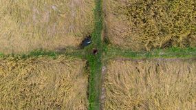 Ariel shot of a paddy field, inspected by a farme,r which looks like a rectangular matrix with four boxes. royalty free stock image