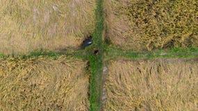 Ariel sköt av ett risfältfält, kontrollerat av en farme, r som ser som en rektangulär matris med fyra askar royaltyfri bild