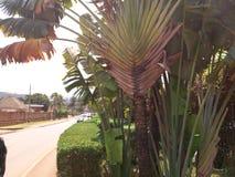 Kampala streets, Uganda royalty free stock photos