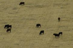 Ariel view of poor dry farmland Royalty Free Stock Photos