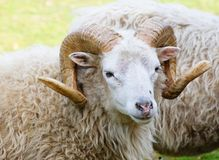 Aries, Royalty Free Stock Image