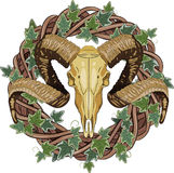 Aries bighorn skull and Rattan wreath entwined with ivy. On white,  illustration, eps-10 Royalty Free Stock Photo