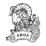 Aries isolated on white background. Royalty Free Stock Photography