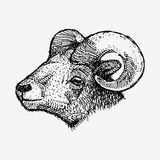 Aries Zodiac Sign illustration stock