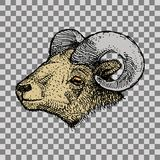 Aries Zodiac sign Stock Photography