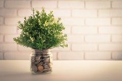 Arificial plants in money jar Stock Images