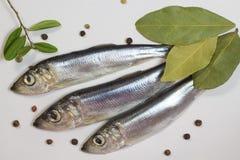 Aringa del pesce di mare, foglia di alloro e pepe su un bianco Fotografia Stock Libera da Diritti
