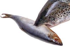 Aringa e salmone astratti Fotografia Stock Libera da Diritti