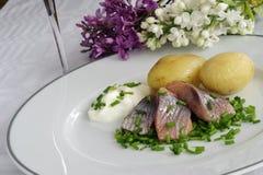 Aringhe marinate Immagini Stock