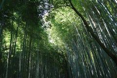 Arishiyama bambusa las Zdjęcie Royalty Free