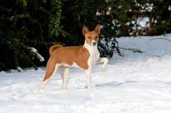 Aristocratic puppy in snow Stock Photos
